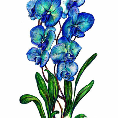Printable Flower – Blue Orchid Tall